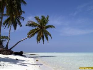Auslandssemester unter Palmen? Das geht. / (CC) Foto: shazwan/Flickr