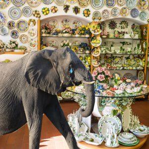 Leider abgelehnt - Elefant erhält keinen Kredit für Eröffnung eines Porzellanladens