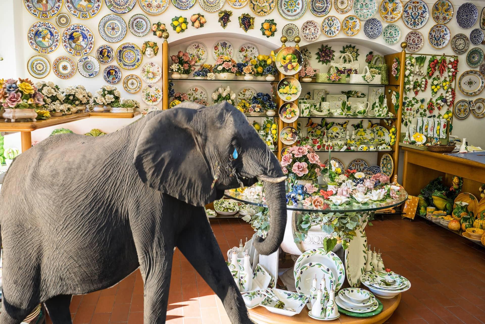 Leider abgelehnt – Elefant erhält keinen Kredit für Eröffnung eines Porzellanladens