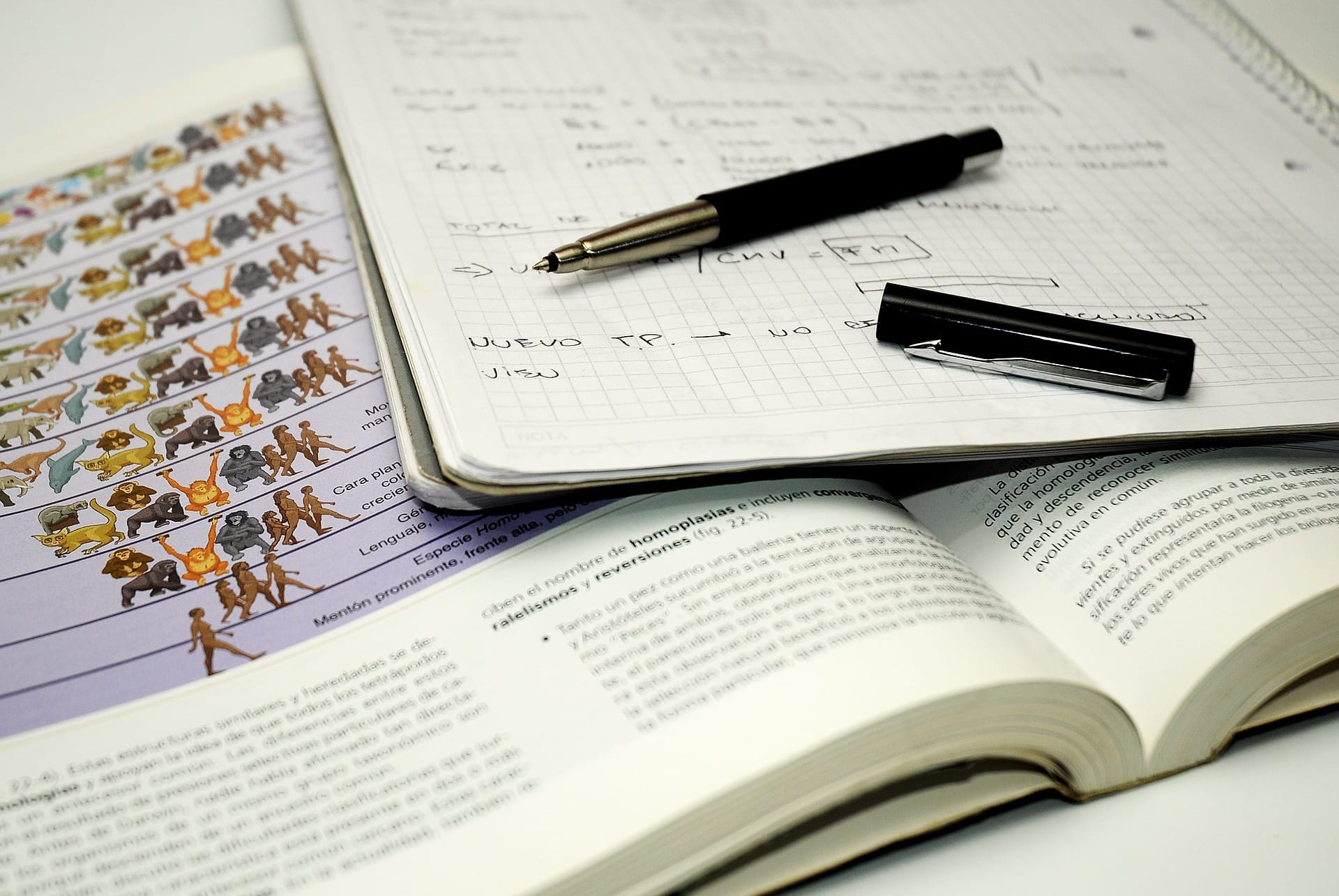 Student Biologie Aufzeichnungen Denken Studie - (c) Pixabay